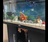 Juwel Aquariums with Cabinets, lights, filter, heater,cleaner,water pump, wave maker, others. plus f