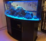 Juwel 460 litre aquarium, fully equipped with too many extras to list, worth over 10000 Dirhams, inc