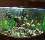 1.3 meter Corner aquarium, in very good conditionWith gravel, external canister filter, stand and a