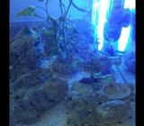 Fish tank in very good condition