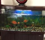 1.2 meter Beautiful Aquarium - well maintained120 x 50 x 66 cm beautiful well maintained aquarium WI