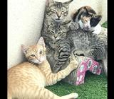 Cute Kittens and Cats for adoption. Adult Ones are spayed and already Vaccinated... Need a Home ...