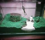 Brand new aquarium with carpet plants. Seeds sprouted and ready to add water. Easy to transport and