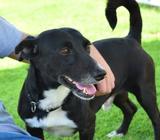 Name: KaramGender: MaleSize: Small-MediumBreed: Terrier crossDOB: 01/01/2013 Karam is a great dog th