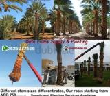Garden & Outdoor > Plants > Palm Trees in UAE Show Phone Number