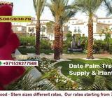 GARDENING + PALM TREES Show Phone Number