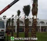 Garden Outdoor > PALM TREES Show Phone NumberShow Phone Number