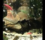 Big size 120 cm x 35 cm x 40 cm Only aquarium and some accessories ,fish are not include,,,price jus