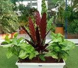 Indoor plants best for office , home school etc