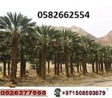 Garden & Outdoor > PALM TREE Show Phone Number
