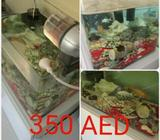 Fish aquarium Excellent condition with food timer, 2 filters, light, Cleaning tools, and decorations