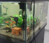 Fresh Water Fish Tank with Live Plant,Soil, accessories and food. the Stand front doors are broken,