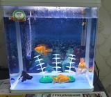 Fish Aquarium size - 50x60x30 (HxWxD)Used for 3 - 4 monthsThis Acrylic Fish tank comes with Storage