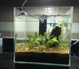 Selling my aquarium due to house moving. It's a squared fish aquarium with real plants. (25 cm x 25