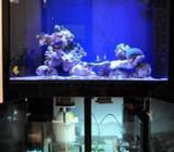 Marine Reef Aquarium, (salt Water) Full set and running Include : Aquarium Tank, SubLED Amercian Lig