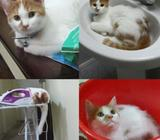 Very friendly, most playful and adorable 2 years Romi. He's spayed, periodically vaccinated, microch