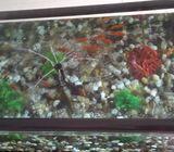 Fish tank cum Centre Table 150x80 cm