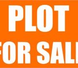 50000 square feet land for sale in Mankhool excellent location