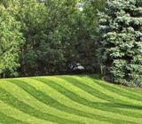 Buy Best Landscaping-Grass In Dubai