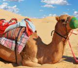 View All Tours, Abu Dhabi Tours