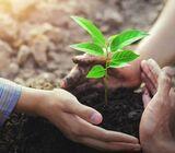 IB ESS (Environmental systems & society Ess ) IA Research Questions