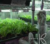 krisprfarms in Dubai